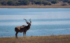 The Finfoot Lake Reserve nestles in the Pilanesberg region of South Africa's North West province. It can be reached from Johannesburg by road in 90 minutes and from Sun City in about 30 minutes. North West Province, Game Lodge, Sun City, Lodges, Ranger, South Africa, Giraffe, Safari