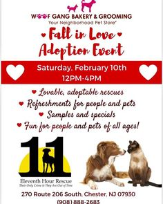 """""""You Just May Fall in Love"""" at our In Store Adoption Event featuring 11th Hour Rescue Pups !  We are donating a Portion of our Day's Sales to this Wonderful Organization . So if you can't Adopt, maybe stop in and Shop . Thank you so much for your Support ❤️🐾🐾❤️🐾🐾 #Woof #Gang #Bakery #ChesterNJ"""