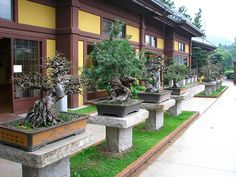 Bonsai in nan lian garden | Flickr - Photo Sharing!