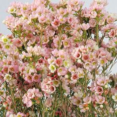 Pink Wax Flower Wholesale Wedding Flowers