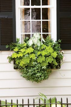 'Aaron' caladium, holly fern, 'Key Lime Pie' heuchera, 'White Nancy' lamium, ivy, and light pink periwinkle come together in this eye-catching window box.