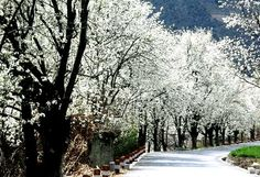 Pear Blossom Brook at Xinjin county in Chengdu