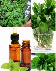 The Top 10 Best Uses For Peppermint Essential Oil