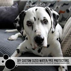 DIY Waterproof Furniture Pads and Dog Bed Toppers - Dalmatian DIY Diy Furniture Protector, Diy Dog Bed, Dog Blanket, Mattress Protector, Waterproof Fabric, Dalmatian, Disabled Dog, Dog Friends, Labrador Retriever