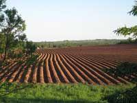 Red dirt field