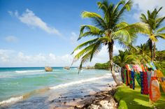 With gorgeous beaches, wonderfully warm tropical waters, and a whole host of things to see and do, Barbados is the ideal holiday destination!
