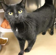 PRESUMED DEAD>Intake: 11/25 Available: Now  NAME: Lily #2 ANIMAL ID: 30271675 BREED: DSH  SEX: Spayed Female  EST. AGE: 1 yr  Est Weight: 9.7 lbs  Health:  Temperament: Friendly  ADDITIONAL INFO: O/S  RESCUE PULL FEE: $39