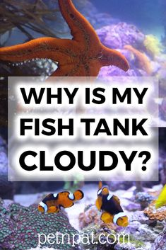Why do I have a cloudy fish tank? There are a few reasons you fish tank is cloudy - here's what they are and how to fix it. Aquarium Stand, Aquarium Ideas, Aquarium Design, Tropical Fish Aquarium, Aquarium Fish Tank, Self Cleaning Fish Tank, Fish Tank Themes, Animal Quotes, Animal Memes