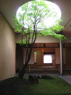 patio-like green corner, zenithal light, tree, circle sky-window, zen
