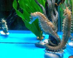 Los caballitos de mar eligen una pareja durante toda su vida... Cuando esta muere permanecen solos por un tiempo y mueren también!