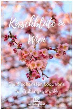 Reisen In Europa, National Parks, Travel City, Inspiration, Bergen, Recipes, Japanese Cherry Blossoms, Japan Travel, Biblical Inspiration