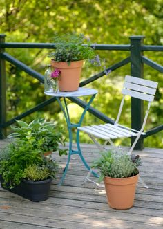 The perfect kitchen garden on your balcony! With a selection of popular herbs to embellish your cooking.    The gardens have been designed to feature an array of herbs and edible plants which include:        Chives      Marjoram      Rosemary      Tarragon      Mint      Sage      Thyme