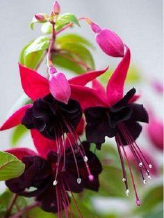 breathtaking fantastic flower..