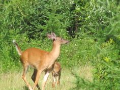 Sunday deer