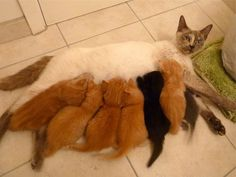 The over-worked mother #Funny#Cute#Cats#Kitten#Adorable#Animals