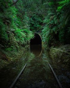 [OC] The abandoned Helensburgh glow worm tunnel after a few days of heavy rain. : AbandonedPorn [OC] The abandoned Helensburgh glow worm tunnel after a few days of heavy rain. Abandoned Buildings, Abandoned Places, Abandoned Castles, Haunted Places, Abandoned Train, Abandoned Mansions, Landscape Photography, Nature Photography, Urban Decay Photography