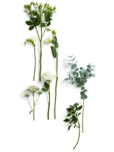 Flowers and Foliage Used in Winter Wedding Florals