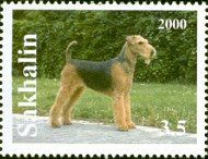Airedale Terrier sta