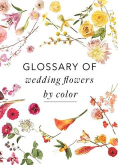 Plan Your Wedding Arrangements Using Our Flower Glossary : Brides
