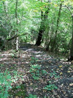 YORKSHIRE WALK: Ilkley Wood & Middleton Wood - A good family walk opposite Ilkley Moor ...