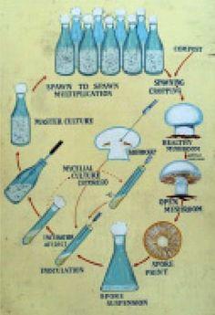 propagating mushrooms
