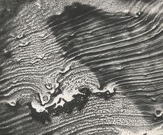 Abstract World, Marine Cycle,  Seahorse - Jean Michel Kollar, 1963