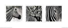 Zebras são uma ótima opção para um ambiente que precise da fase Água: listras sinuosas pretas. Se você acrescentar uma moldura preta, fica ainda melhor. E estão em promoção no site da Allposters - www.alinemendes.com.br Zebras, Feng Shui, Wall Art Prints, Poster Prints, Frames For Canvas Paintings, Affordable Wall Art, Cool Posters, Triptych, Custom Framing