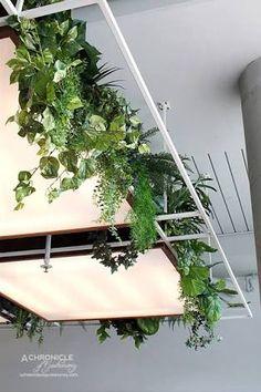 Hanging Plants, Indoor Plants, Interior Plants, Cafe Interior, Ceiling Design, Green Walls, Cafe Design