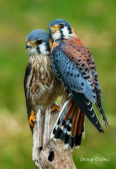 Fantastic Cost-Free beautiful birds of prey Style As a birds involving prey wedding photographer, the main issue a lot of make a complaint about will be the un All Birds, Birds Of Prey, Love Birds, Angry Birds, Pretty Birds, Beautiful Birds, Animals Beautiful, Beautiful Couple, Beautiful Images