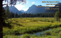"""BEAUTIFUL NATURE PICTURES """"Nature Heals The Mind"""": Forests..."""