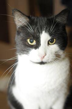 Les chats de la région n'ont toujours pas besoin de médailles, même si l'Ordre des médecins vétérinaires du Québec (OMVQ) en recommande l'adoption.