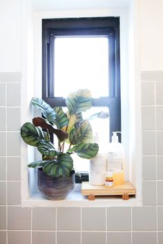 34 Genius Tips For An Instant Home Upgrade #refinery29 http://www.refinery29.com/59344#slide25 A hearty plant like a ficus can withstand the hot and cold temperatures of bathrooms. Plus, it'll get watered with each shower! Since the windowsill isn't truly waterproof, we set our jumbo-sized bottles of shampoo and conditioner on a bamboo sushi geta that'll resist water.