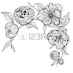 Fond Noir Et Blanc Avec Des Fleurs De Pivoine Douces  Banque D Images  Vecteurs et Illustrations Libres de Droits