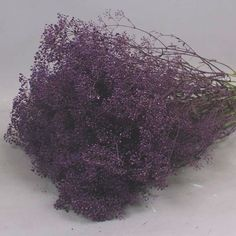 Gypsophila Dyed Purple is a popular flower favourited by many brides to be! 2018 Wedding Trend: Ultra Violet Purple. For lilac and purple wedding flowers to suit your colour scheme, visit our website at www.trianglenursery.co.uk/fresh-flowers!