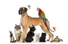 http://www.forumcani.com/wp-content/uploads/2014/09/bigstock-Group-of-pets-Dog-cat-bird-44783536-1024x663.jpg Cani in ristorante, il divieto è assoluto dove si preparano gli alimenti - Corriere della Sera - http://www.forumcani.com/blog/2015/05/28/cani-in-ristorante-il-divieto-e-assoluto-dove-si-preparano-gli-alimenti-corriere-della-sera/ Pet Community and Social Network