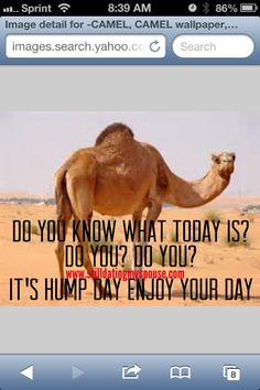 Do you know what today is? Do you? Do you? It's HUMP day (in the camel from Geico voice) lol enjoy your day www.stilldatingmyspouse.com