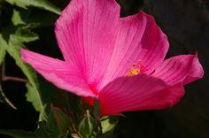 Десять растений цветущих в сентябре