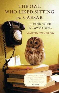 The story of an odd couple-a British military historian and the Tawny Owl with whom he lived for fifteen years Martin Windrow was a war historian with little experience with pets when he adopted an ow