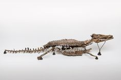 Bernissartia fagesii, this is one of the four crocodiles found during the excavations of the Iguanodons at Bernissart. -Dinosaur Gallery- (Photo: Royal Belgian Institute of Natural Sciences)