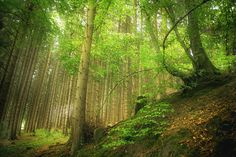 Wald by Markus Meltzer on 500px