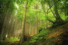 Wald by Markus Meltzer on 500px