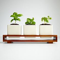 Would love the herb set to this...modern herb garden for kitchen window
