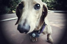 Buddy's little Buddy #Dogs