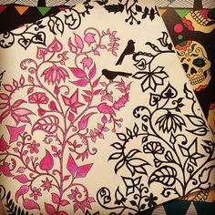 #florestaencantada #passarinho