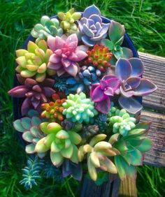 Houseplants That Filter the Air We Breathe Beautiful Colorful Succulents Succulent Gardening, Succulent Terrarium, Garden Plants, Container Gardening, Indoor Plants, Organic Gardening, Indoor Gardening, Colorful Succulents, Cacti And Succulents