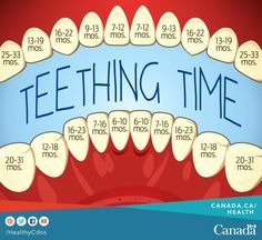 And Your Baby: Symptoms And Remedies Excellent teeting chart - when to expect to see those teeth!Excellent teeting chart - when to expect to see those teeth! Baby Trivia, Pinterest Baby, Foto Newborn, Newborn Care, Baby Life Hacks, Baby Information, Baby Planning, Baby Care Tips, Baby Health