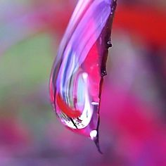 Pink raindrop. #macro  #photography