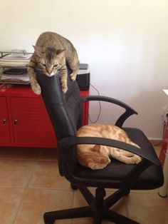 Compartiendo nuestra silla de escritorio