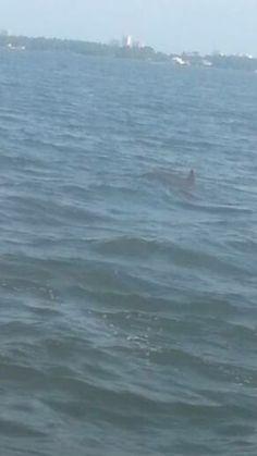 #BRbeachlife15 dolphin :)