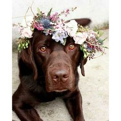 The cutest flower girl we've ever seen! Dress your pet for the occasion with…